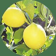 レモン果皮